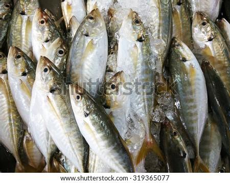 Fresh Mackerel on a market stall in Thailand - stock photo