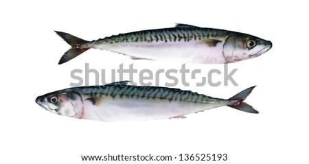 Fresh mackerel on white background - stock photo