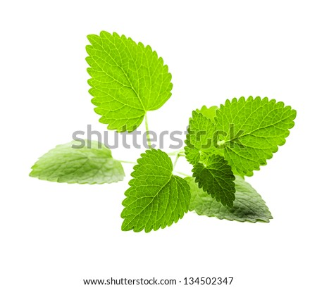 Fresh melissa leaves isolated on white background - stock photo