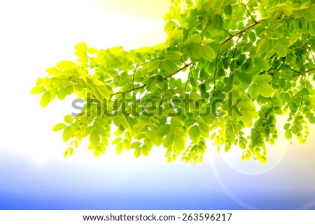fresh mild early growth green leaves and branches on morning sunrise - stock photo