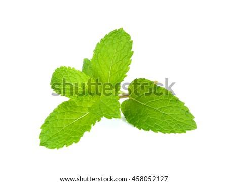 Fresh mint isolated on the white background. - stock photo