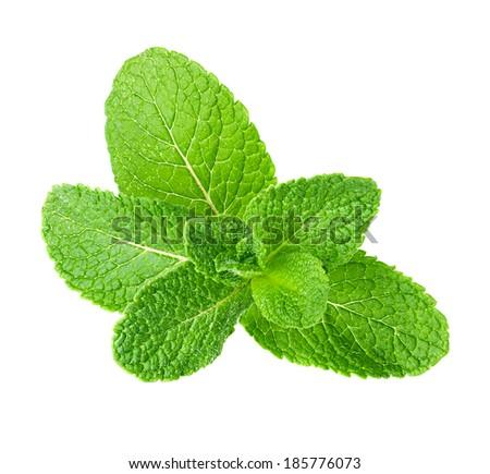 Fresh mint  isolated on white - stock photo