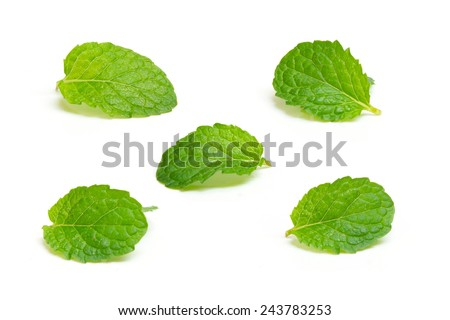Fresh mint isolated on white background - stock photo