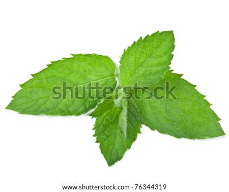 fresh mint leaf isolated - stock photo