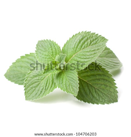 fresh mint leaf isolated on white background - stock photo