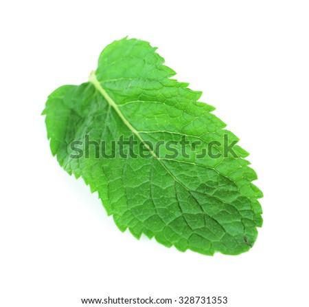 Fresh mint leaf isolated on white, close up - stock photo