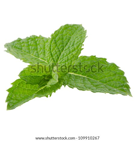 Fresh mint leaves isolated on white background. - stock photo
