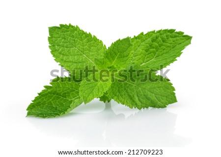 fresh mint leaves , isolated on white background - stock photo