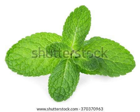 Fresh mint leaves isolated on white background. - stock photo