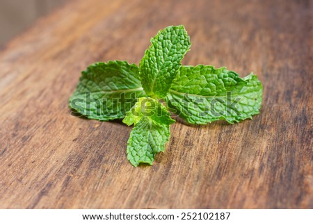 Fresh mint , on rustic wooden background. - stock photo