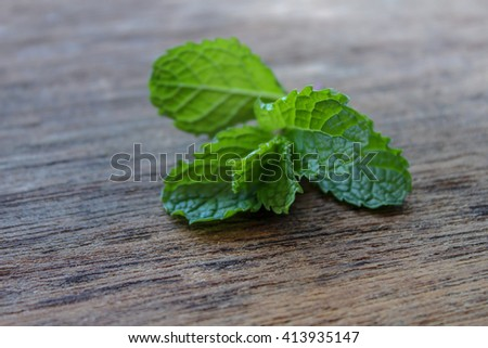 fresh mint on the wooden board - stock photo