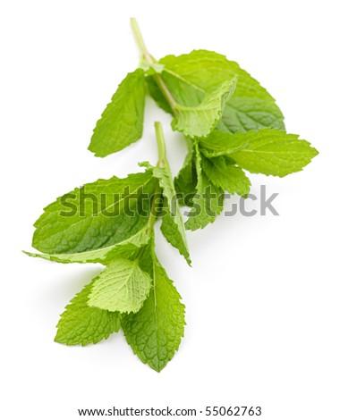 Fresh mint sprigs isolated on white background - stock photo