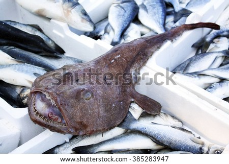 Fresh monkfish on the counter on the fish market - stock photo
