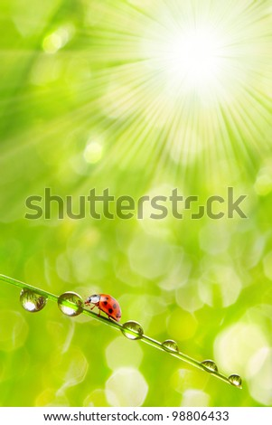 Fresh morning dew on a spring grass and little ladybug, natural background - close up with shallow DOF. - stock photo