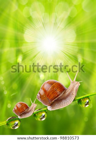 Fresh morning dew on a spring grass and two little snails, natural background - close up with shallow DOF. - stock photo