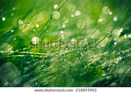Fresh morning dew on spring grass, natural background - closeup  - stock photo