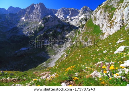 Fresh mountain flowers and green grass on the slope climbing from the valley - stock photo