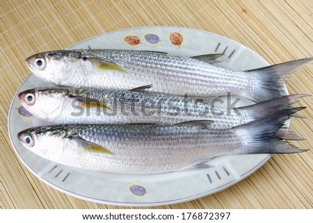 Fresh Mullet fish on palte - stock photo
