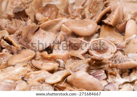 Fresh mushrooms background - stock photo