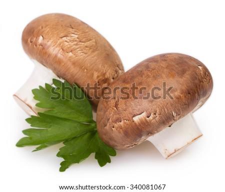 fresh mushrooms isolated on white background - stock photo