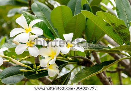 fresh of flowers and green leaves on green background - stock photo