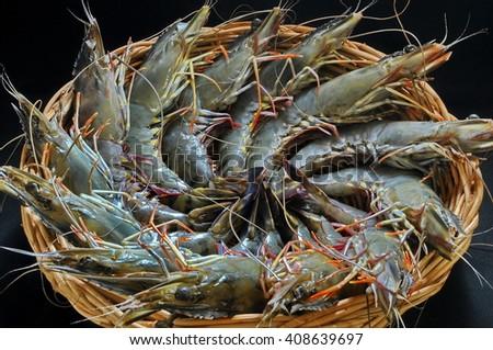 Fresh of Tiger prawns - stock photo