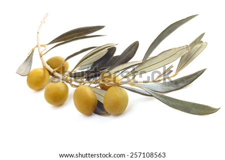 Fresh olives on the olive branch isolated on white background - stock photo