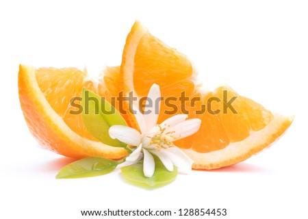 Orange Blossom Pictures Orange Blossom Stock