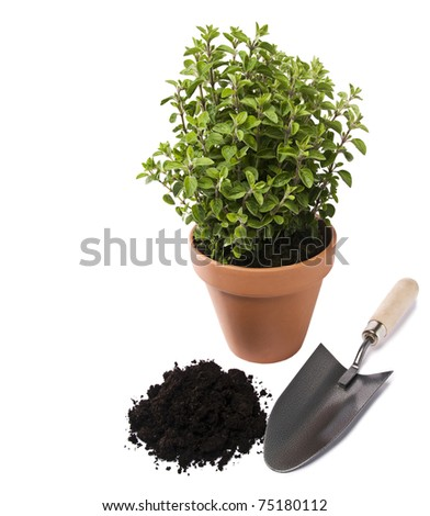 Fresh oregano herb in pot with soil and spade isolated - stock photo