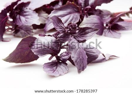 Fresh organic basil isolated on white background - stock photo