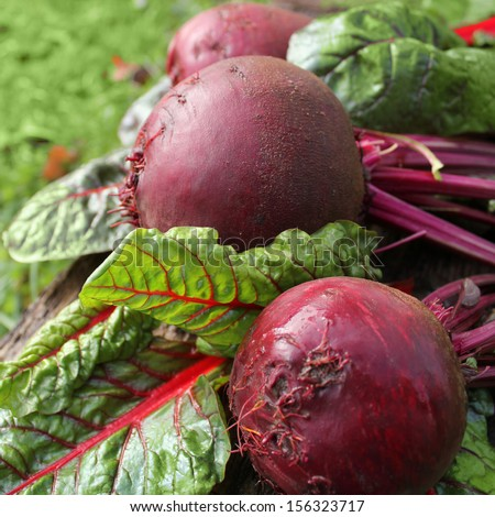 fresh organic beets  - stock photo