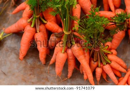 Fresh Organic Carrots - stock photo