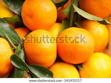 fresh organic clementines picked with green leaves - stock photo