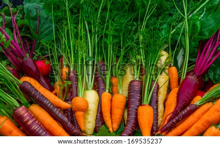 Fresh Organic Garden Vegetables - stock photo