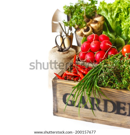 Fresh organic kitchen garden vegetables in vintage wooden box on a white close-up. - stock photo