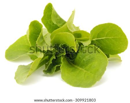 Fresh organic lettuce leaves on a white background - stock photo
