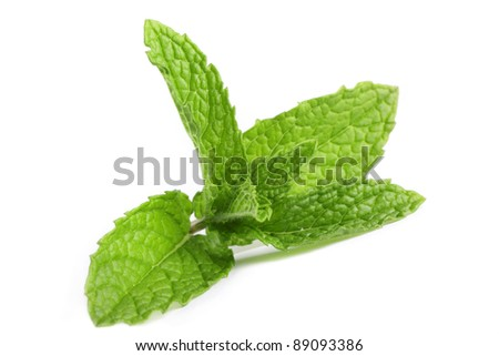 Fresh, organic mint isolated on a white background. - stock photo
