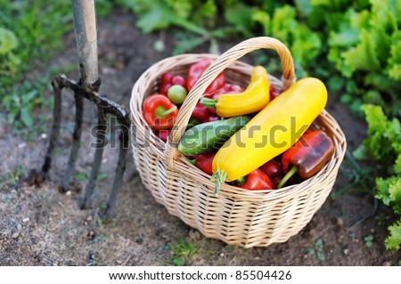 Fresh organic vegetables in a basket and a pitchfork - stock photo