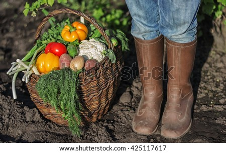 fresh organic vegetables into the old basket and feet in rubber boots - stock photo