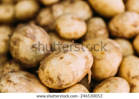 Fresh Organic Young Raw Yellow Potatoes On Local Agricultural Vegetable Market - stock photo