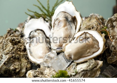 Fresh Oyster - stock photo