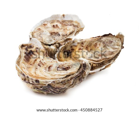 Fresh oysters on white background - stock photo