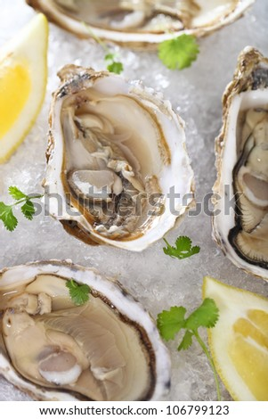 Fresh oysters platter served in ice with lemons - stock photo
