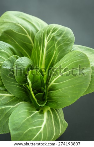 Fresh Pak Choi or Bok Choy - a type of Chinese cabbage - stock photo