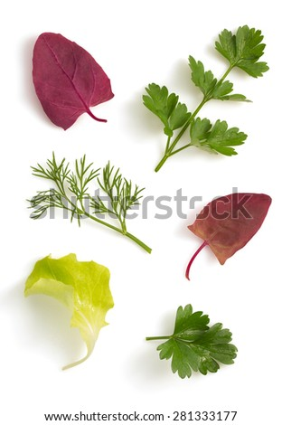fresh parsley and salad leaf isolated on white background - stock photo