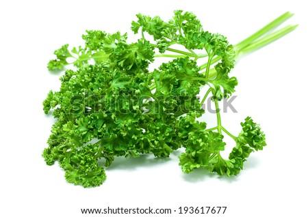 Fresh parsley isolated on white background - stock photo