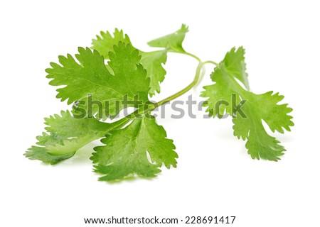 Fresh parsley leaf isolated on a white background - stock photo