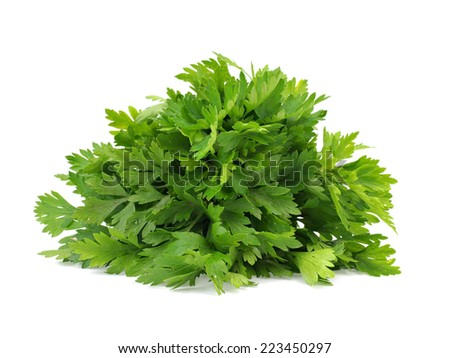 Fresh parsley on a white background - stock photo