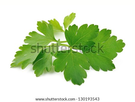Fresh parsley on a white background .Green spice - stock photo
