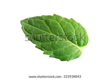 Fresh Peppermint Leaf Isolated On White Background - stock photo